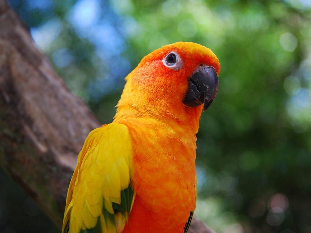 pet bird 3