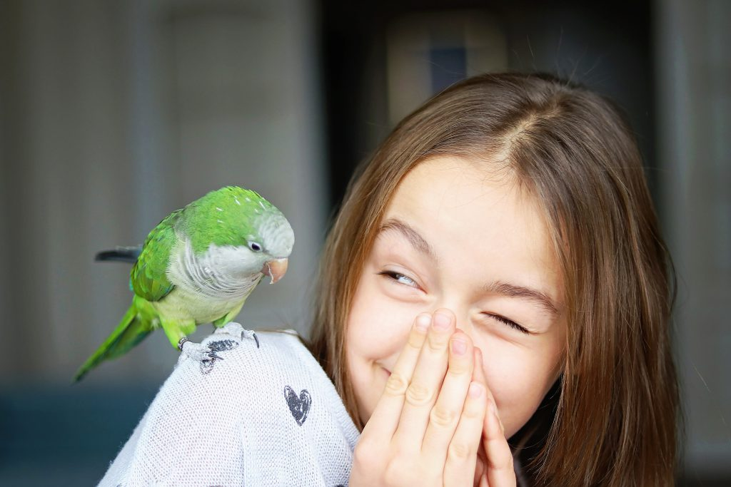 pet-green-monk-parakeet-parrot