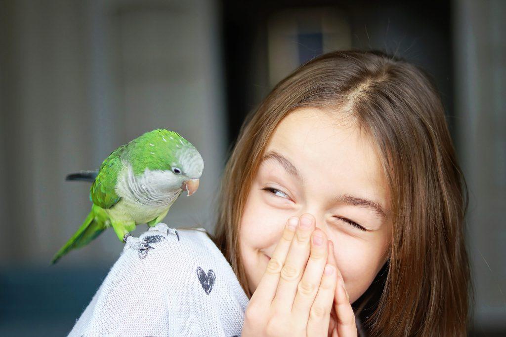 pet-green-monk-parakeet-parrot