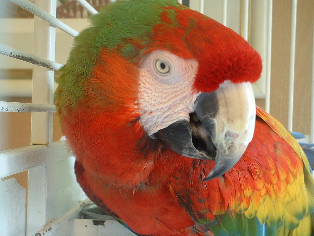 world parrots