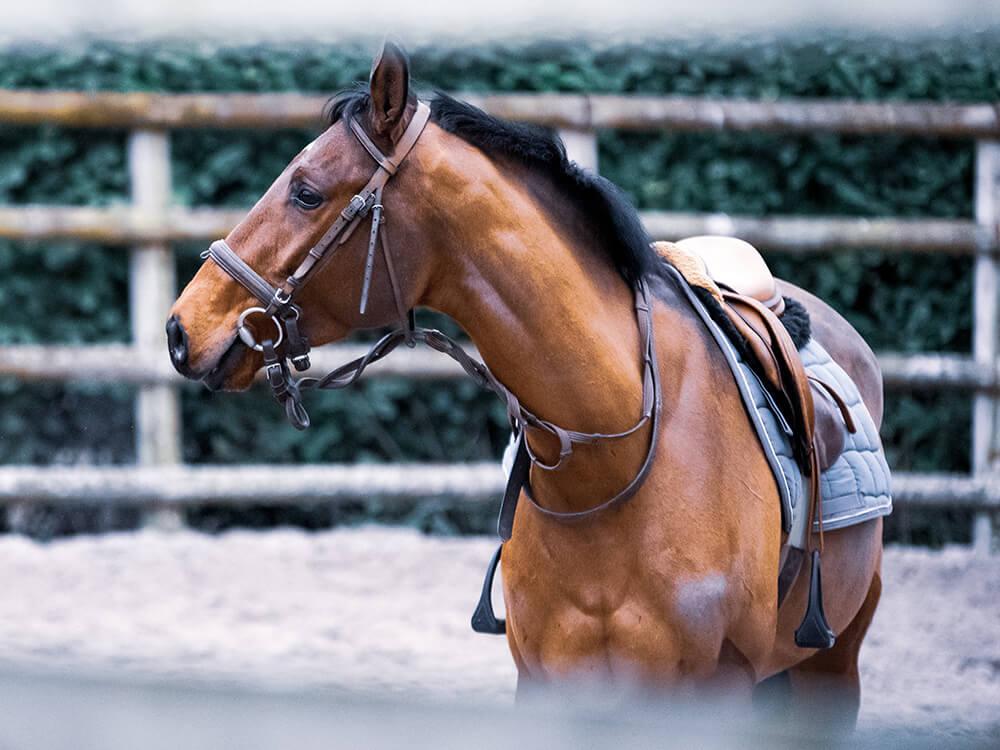 american paint horse 1