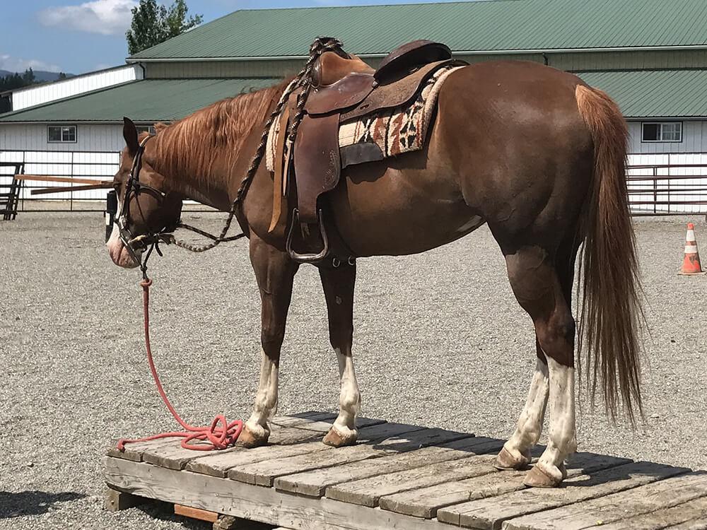 american paint horse 3