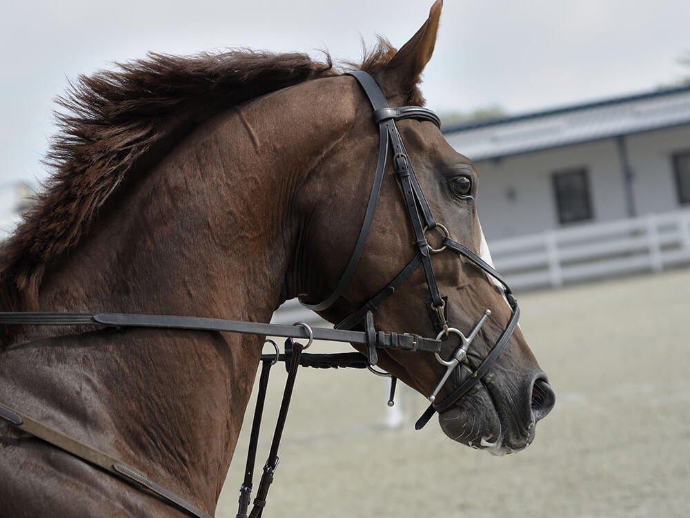 american paint horse 7