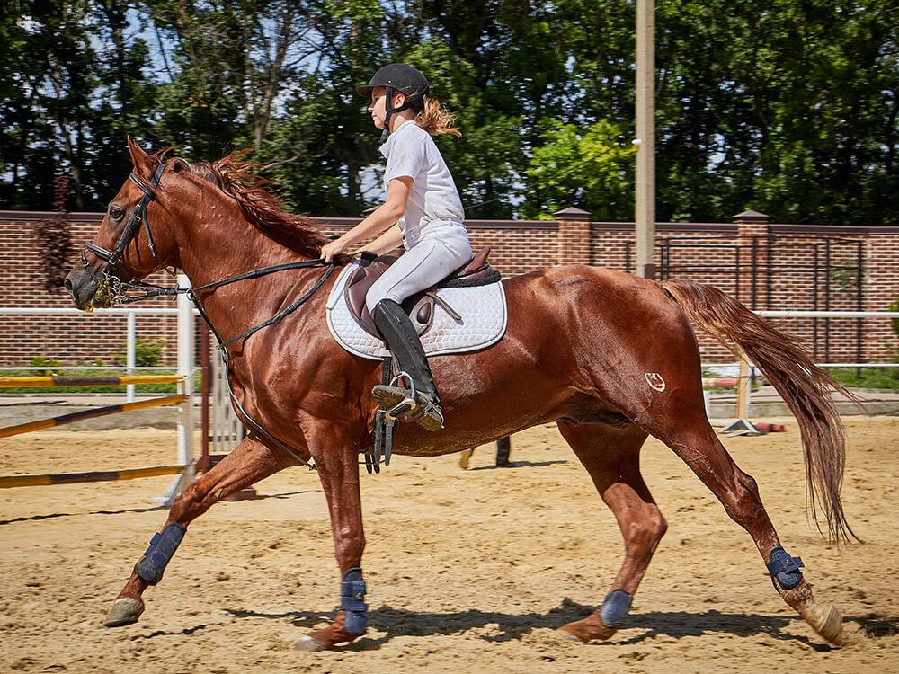 american paint horse 8