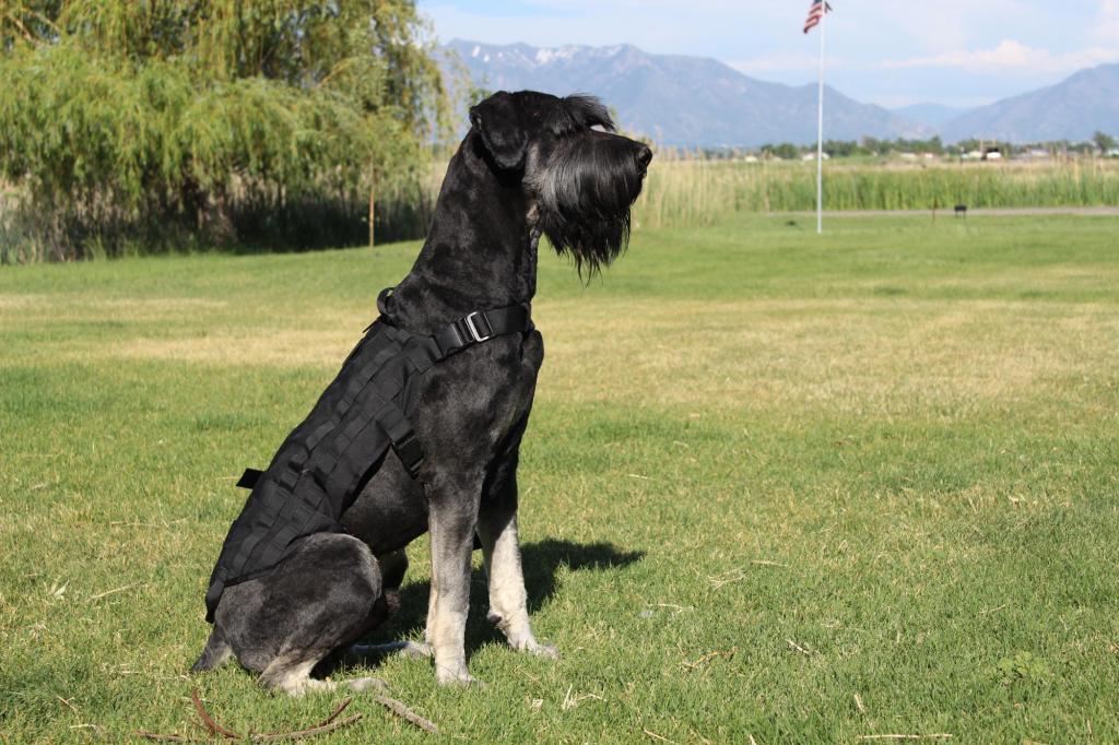 best guard dog 10