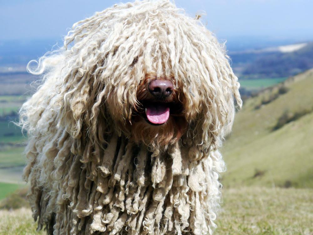 best guard dog 5