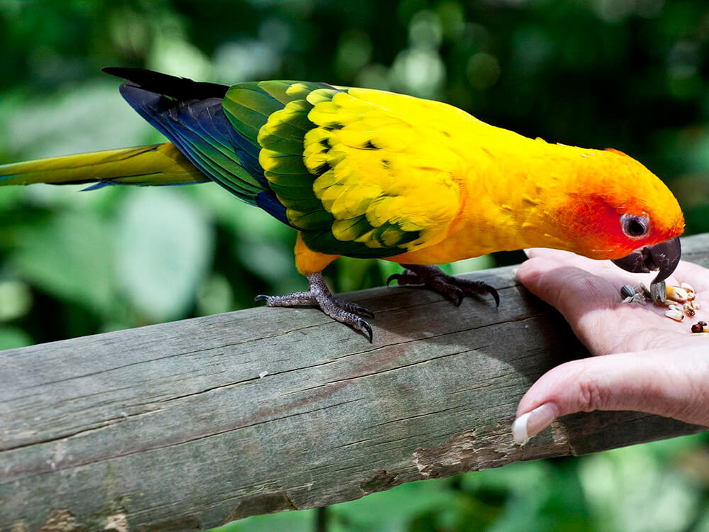 are conures smart