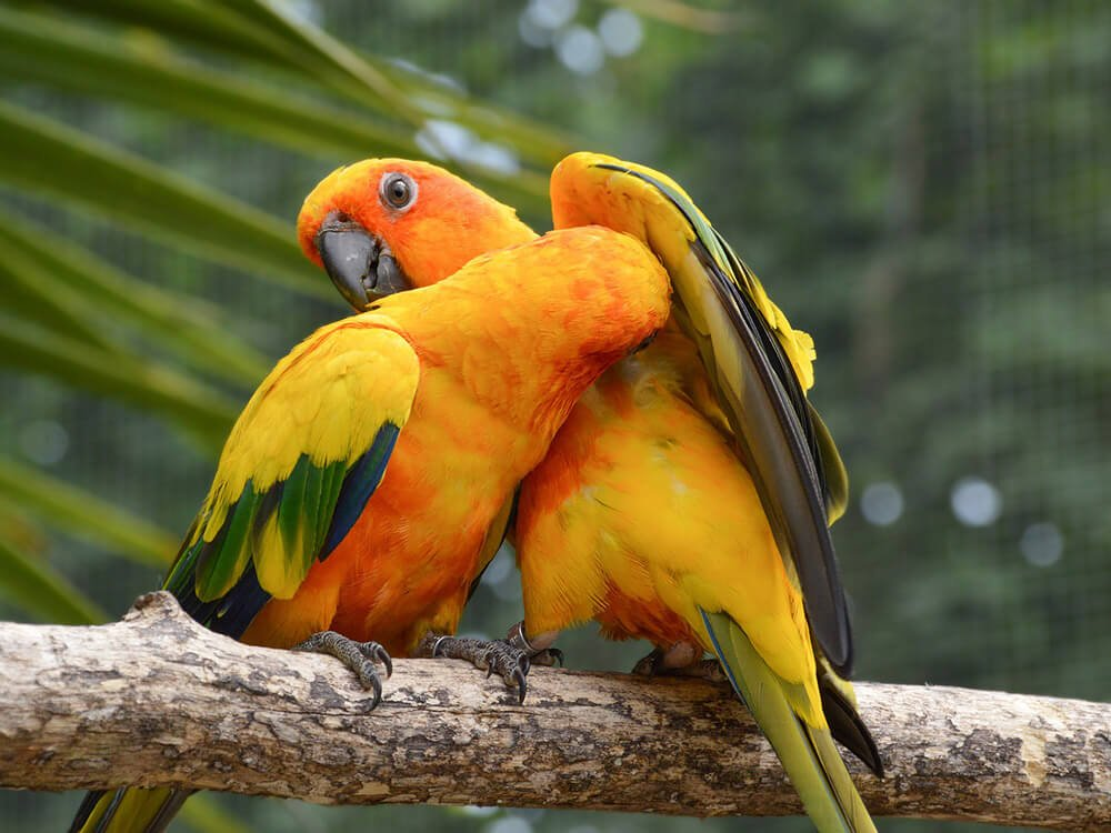 conure loves