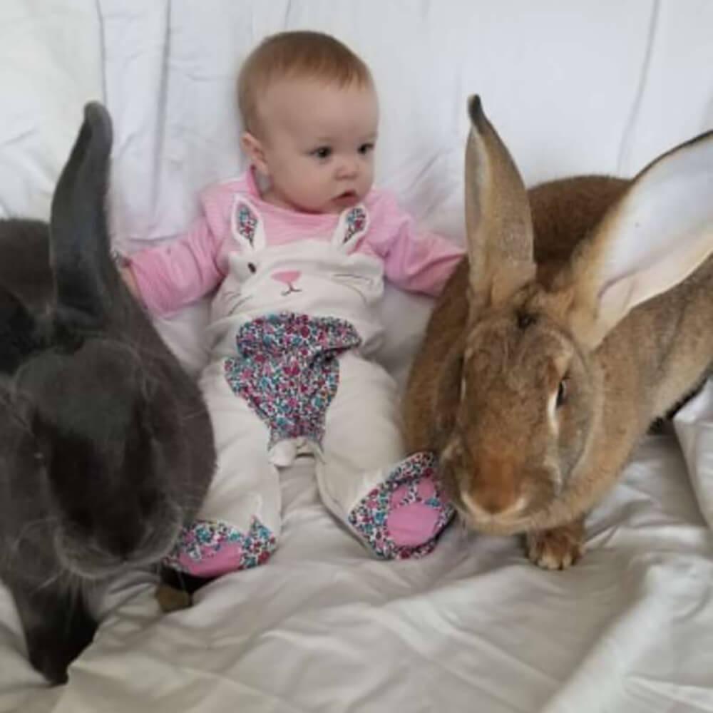 giant rabbit couple