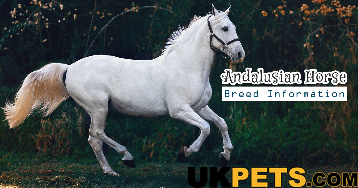 Andalusian Horse Breed Information Appearance Cost Care Ukpets