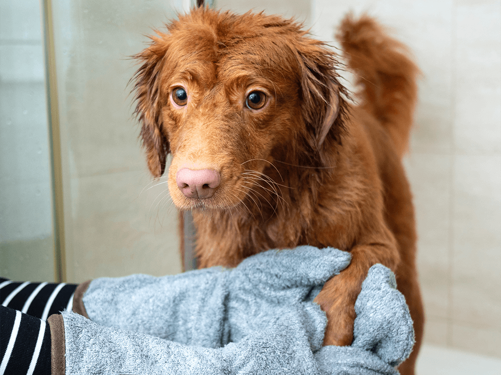 Dog Grooming 2