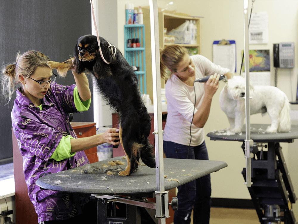 Dog Grooming 8