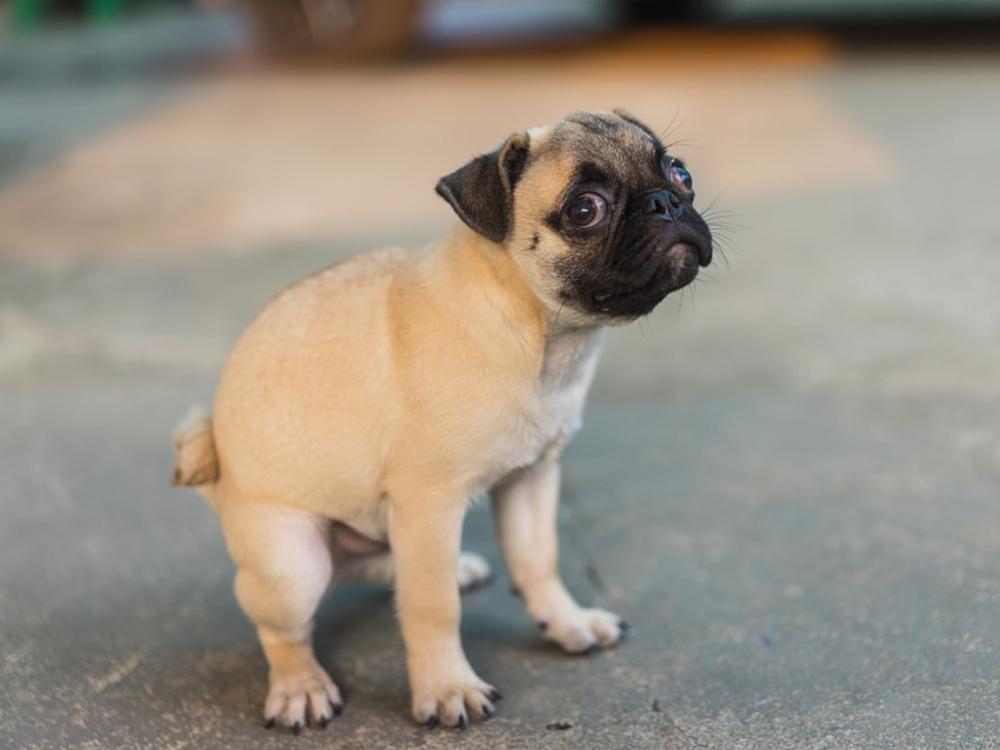 Gastroenteritis in Dogs 1
