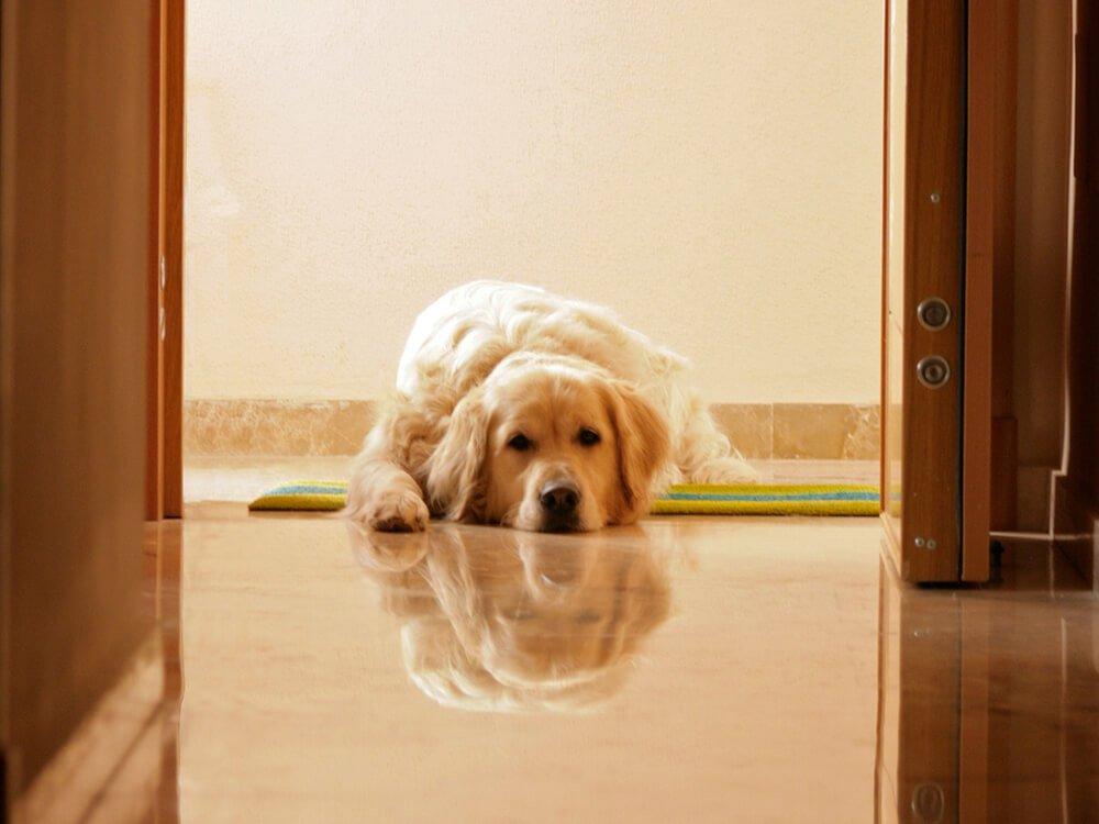 Gastroenteritis in Dogs 3