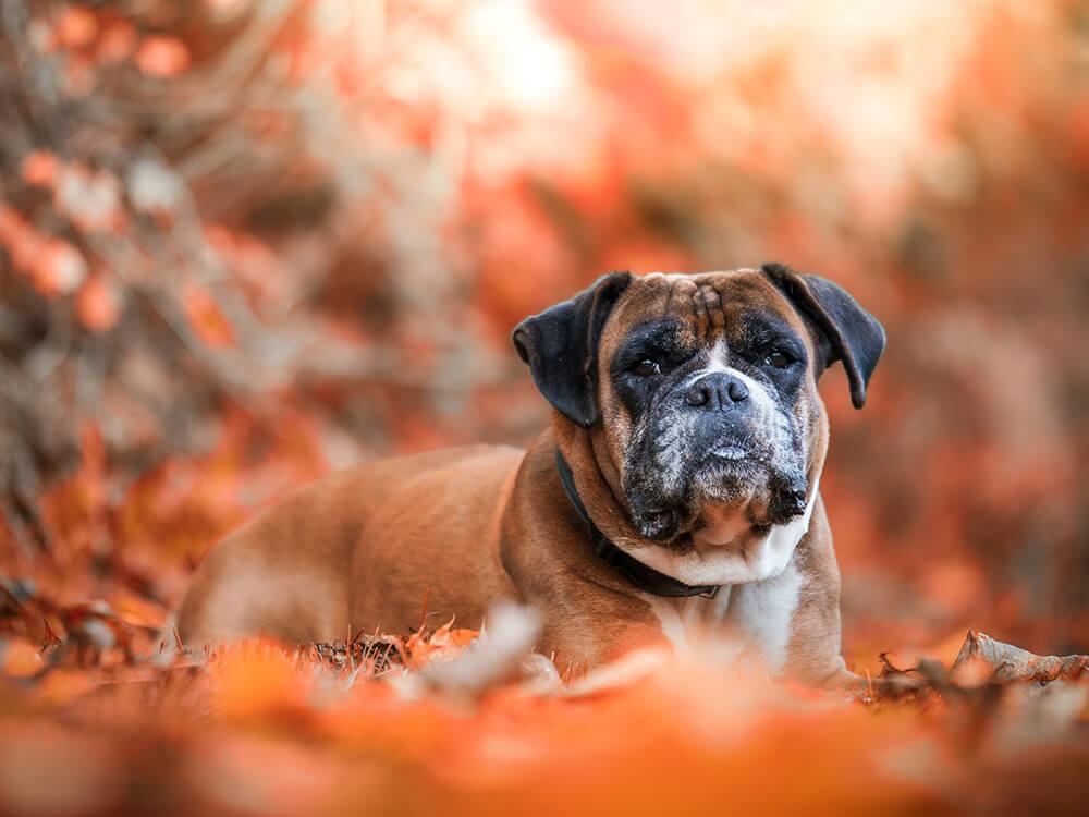 Gastroenteritis in Dogs 4