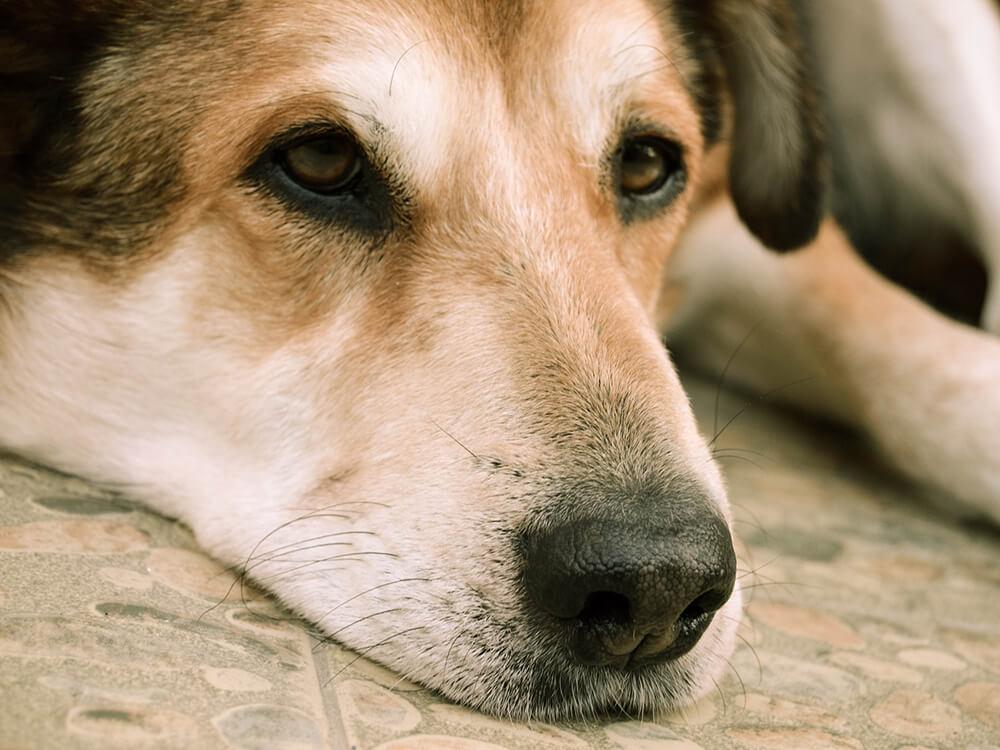 Gastroenteritis in Dogs 5