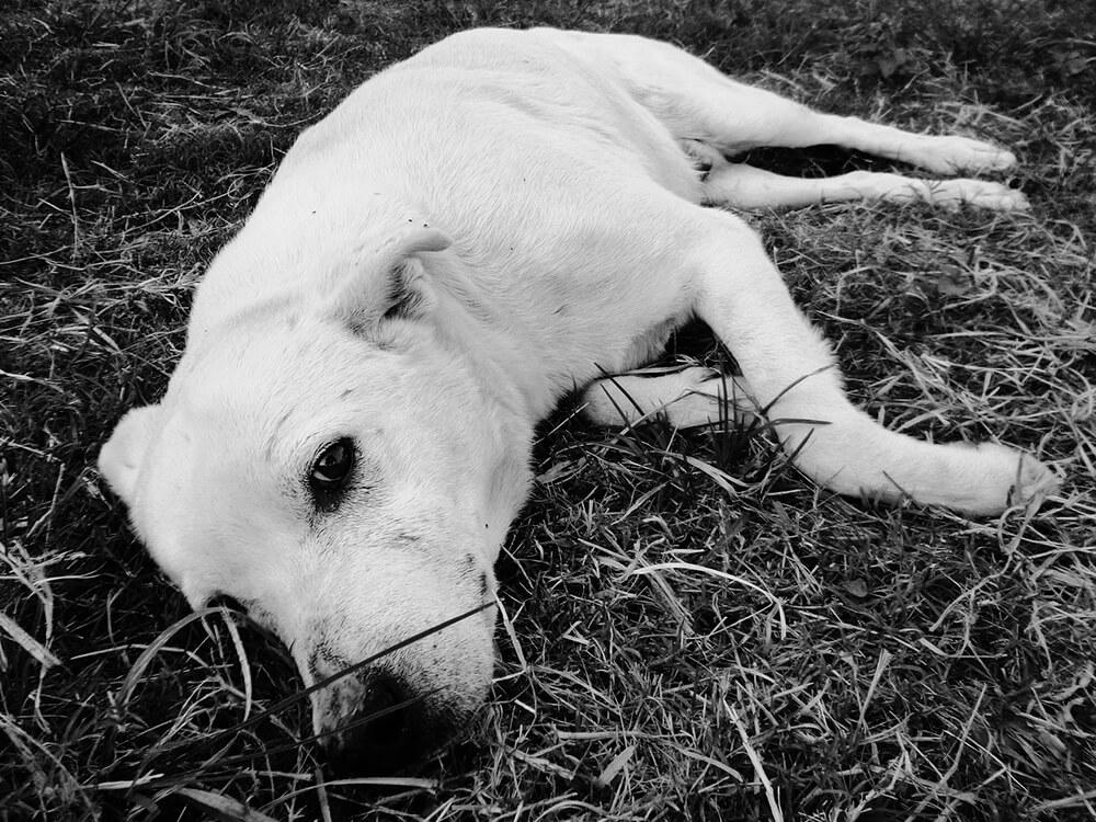 Gastroenteritis in Dogs 9