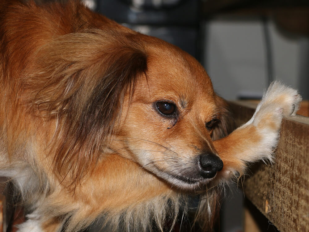 Gastroenteritis in Dogs7
