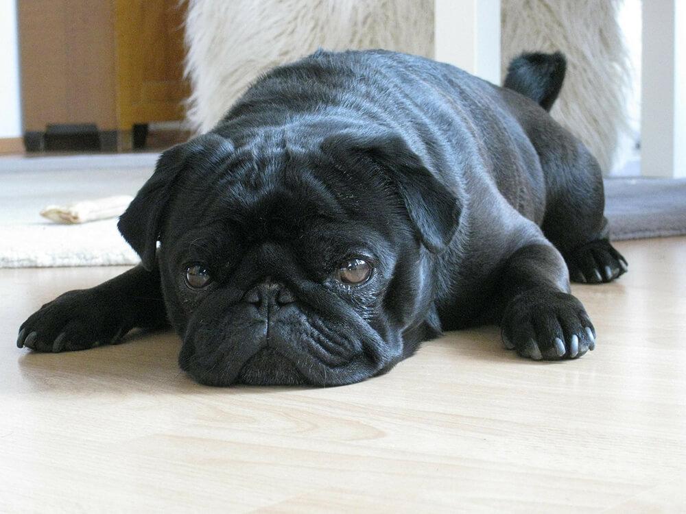 Gastroenteritis in Dogs8