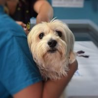 Heart Murmur in Dogs: Symptoms, Diagnosis, and Treatment