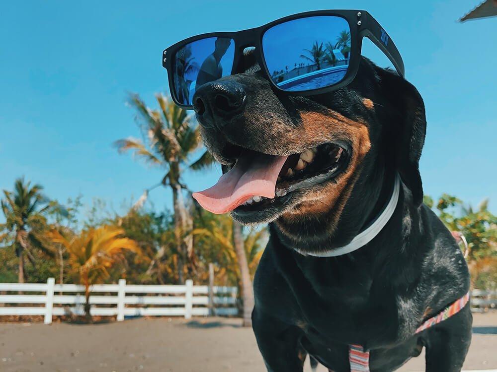 Heatstroke in Dogs 3