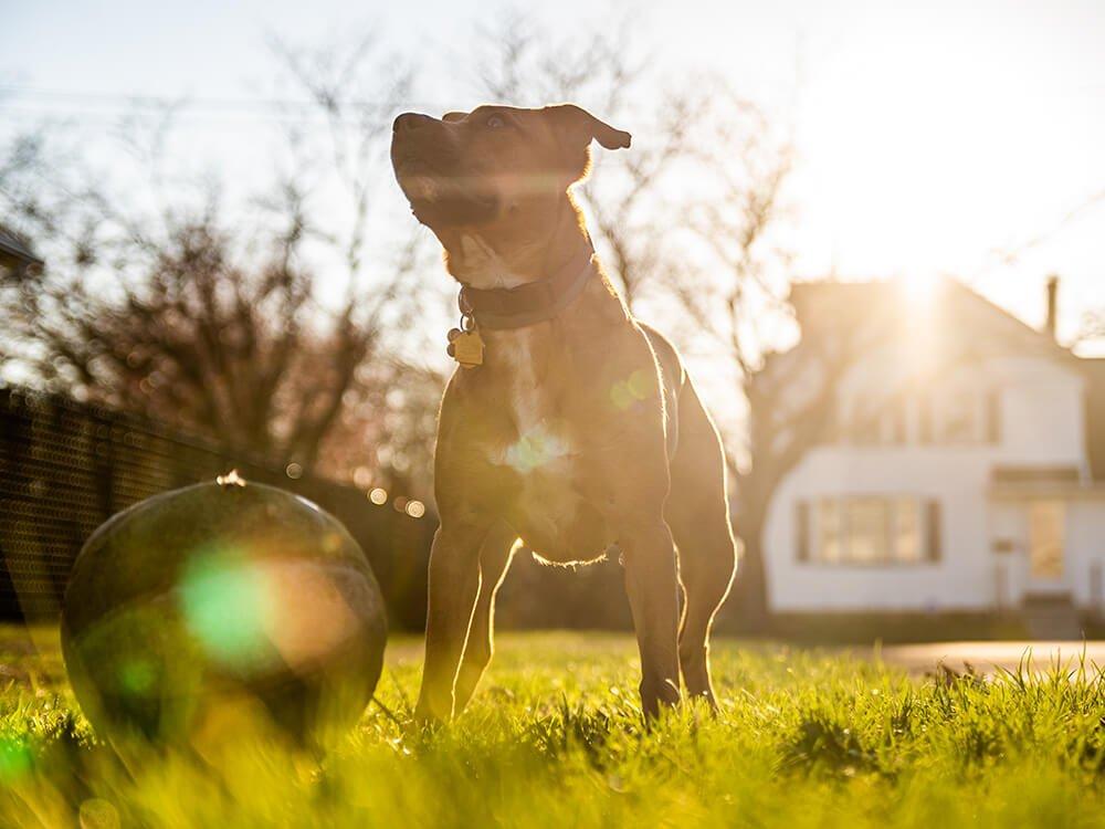 Heatstroke in Dogs 7