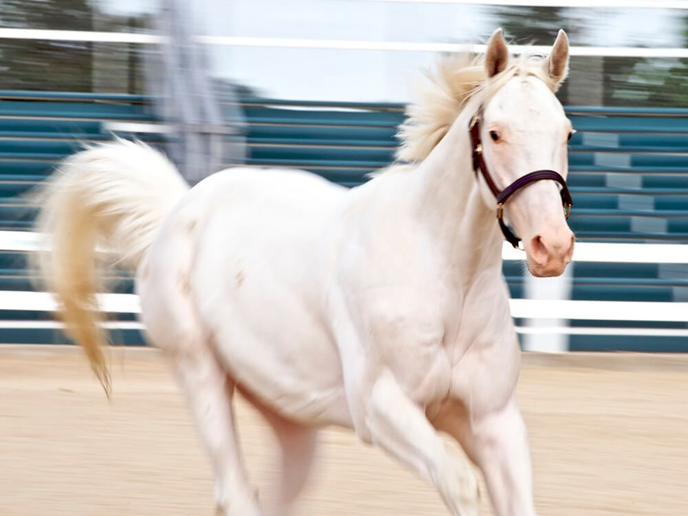 thoroughbred horse 6