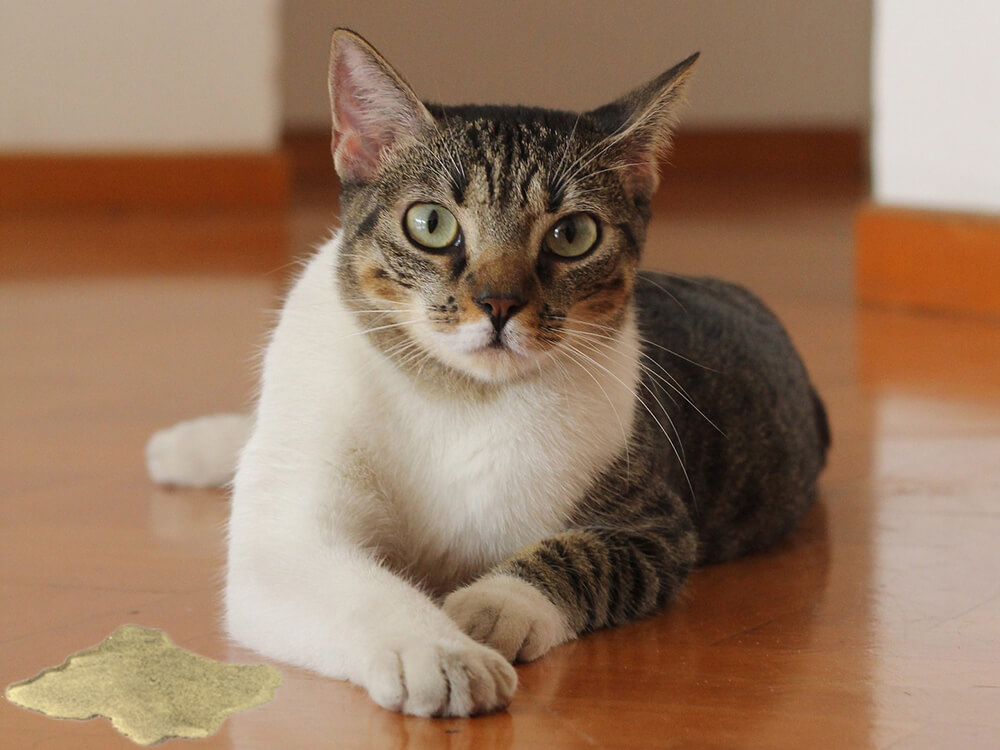 cat Changes in Urination