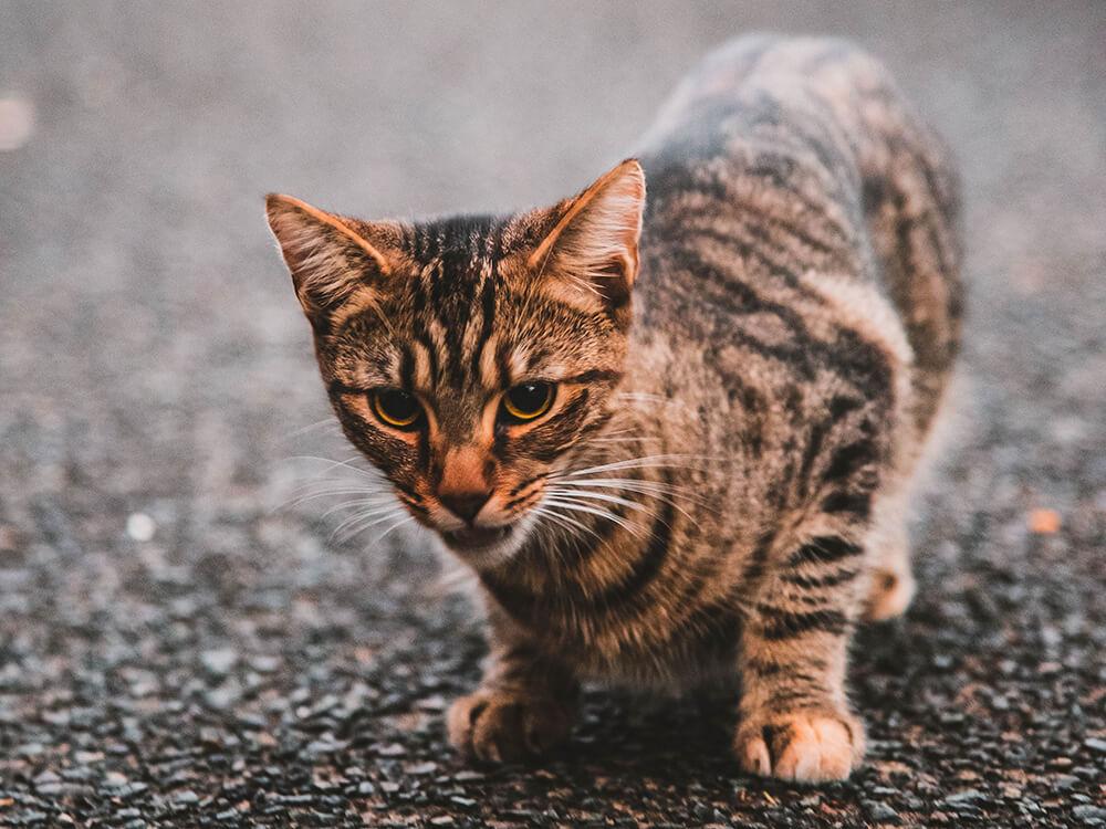 cat Diarrhoea
