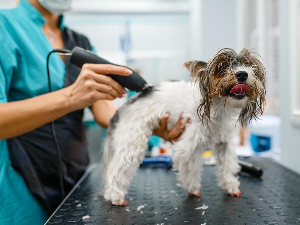 dog-groomer