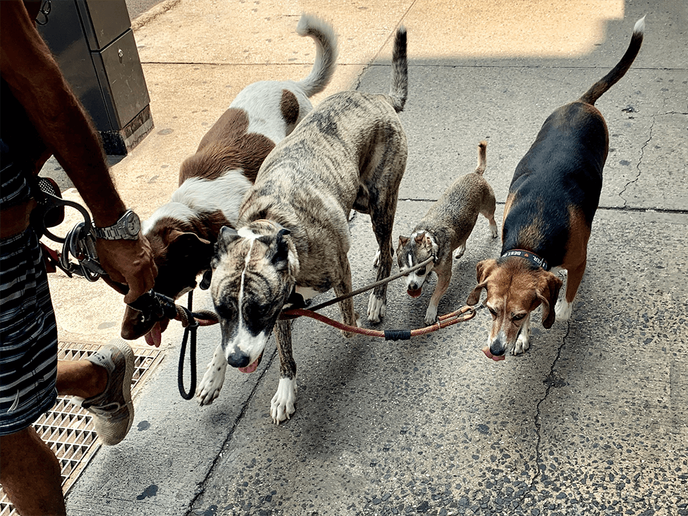 dog-walking service