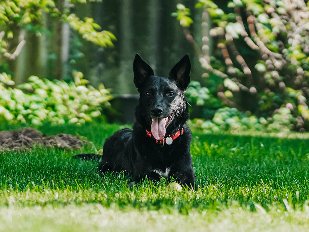 first signs of heat stroke in dogs