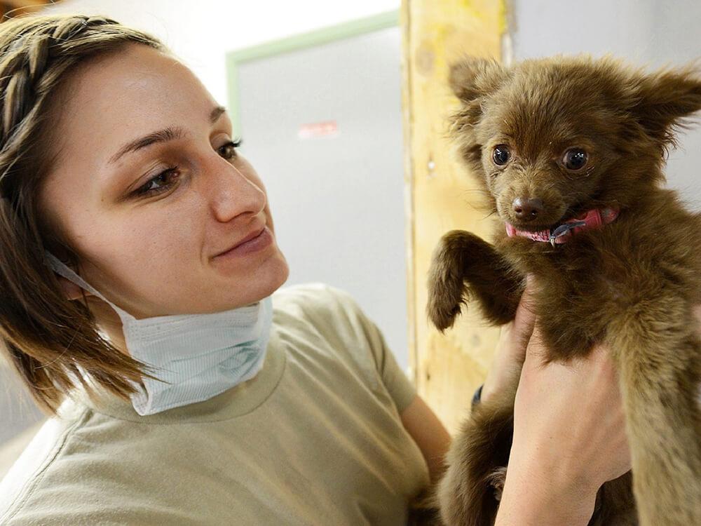 heart murmur grades in dogs