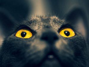 Conjunctivitis in Cats: Symptoms, Diagnosis, Treatments