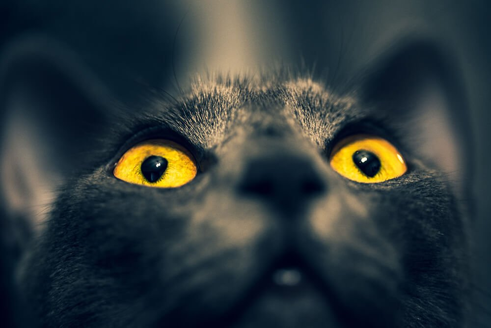 how long is conjunctivitis contagious in cats