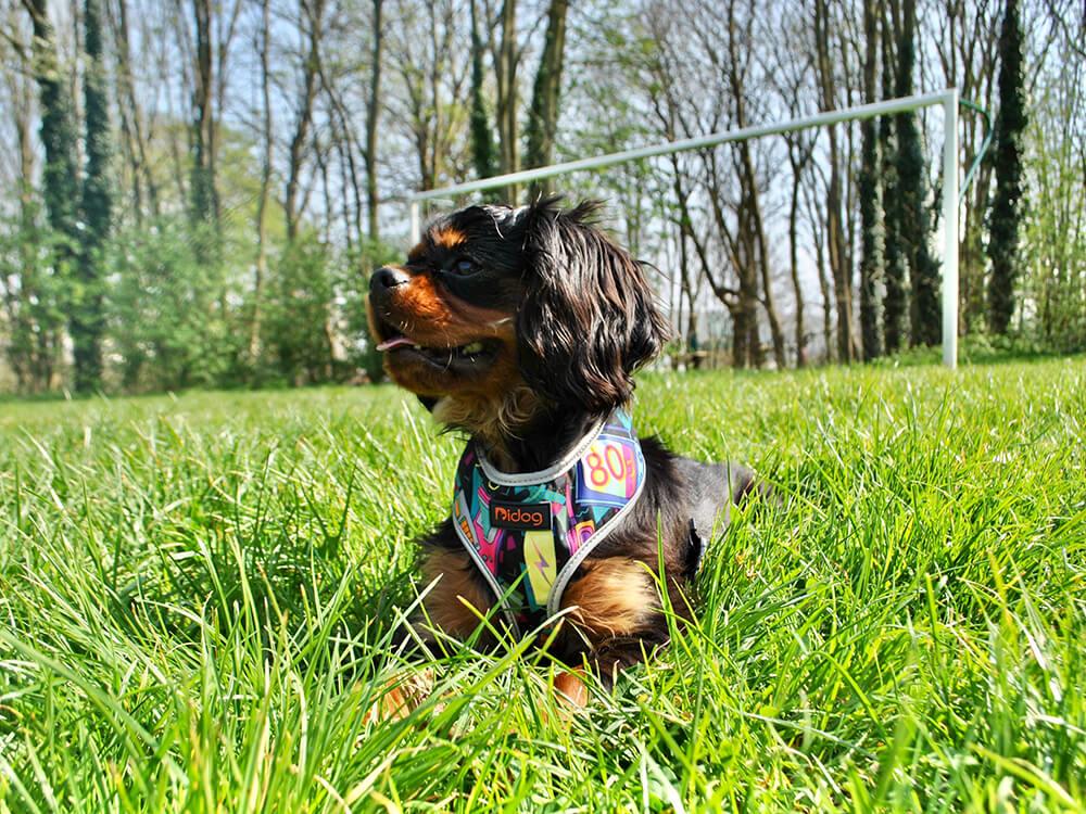 how to treat heat stroke in dogs