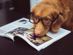 All Your Questions Answered on Conjunctivitis in Dogs
