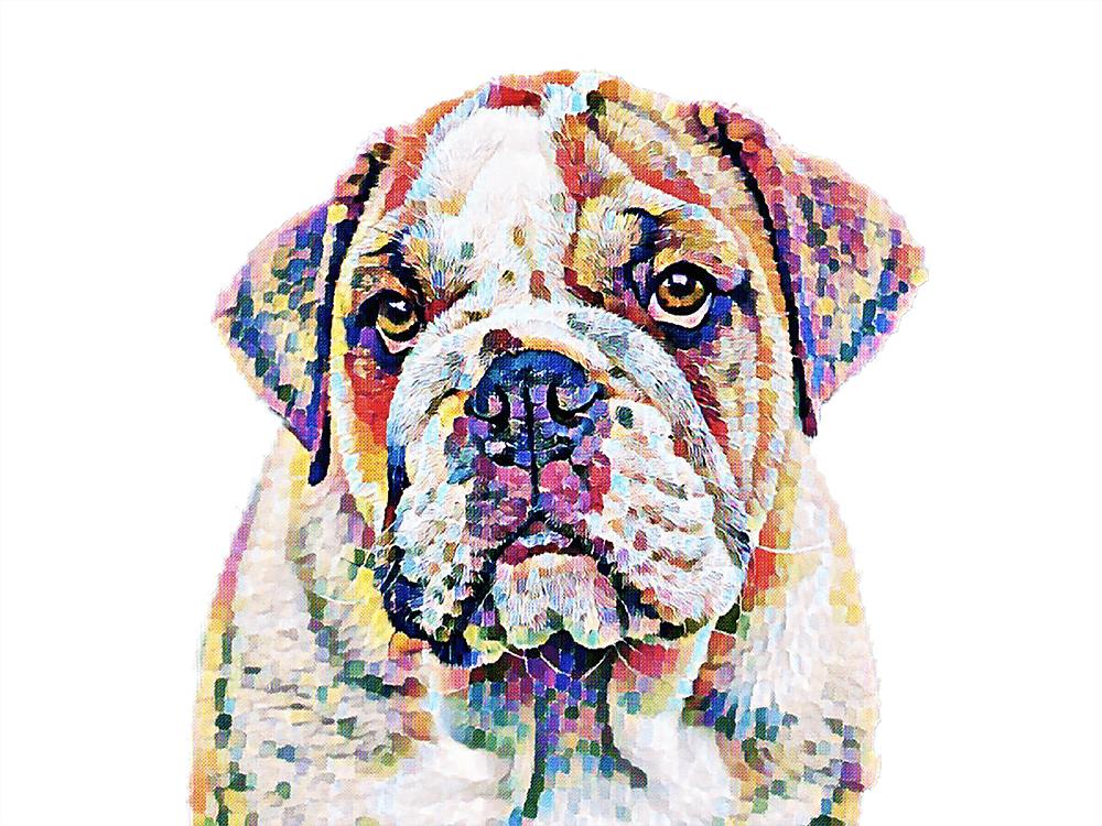 pet-portraits 1