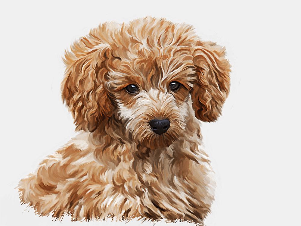 pet-portraits 5