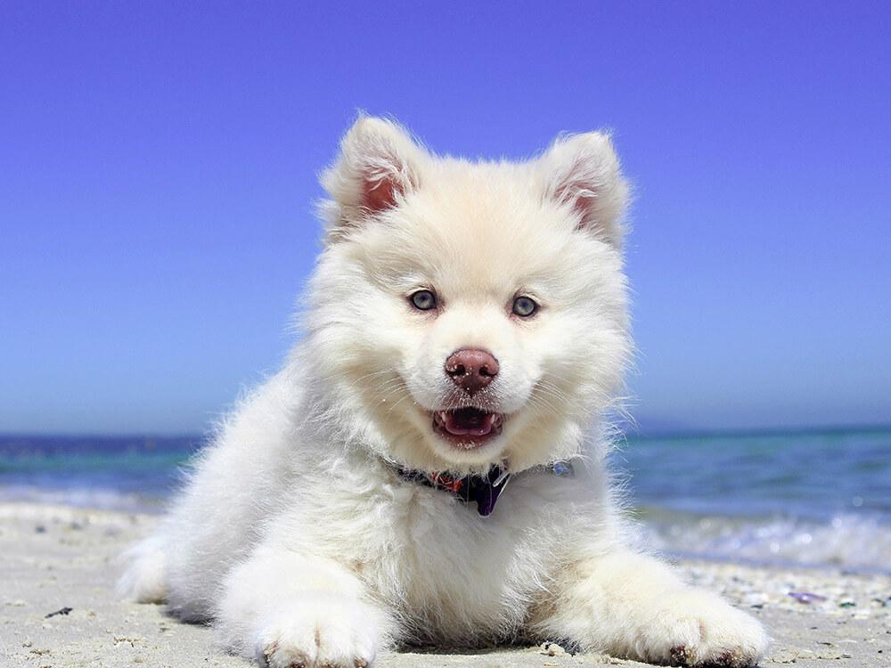 reverse sneezing in dogs 9