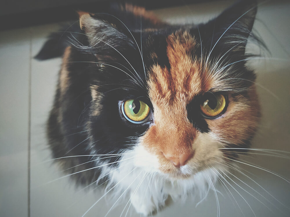 signs of conjunctivitis in cats