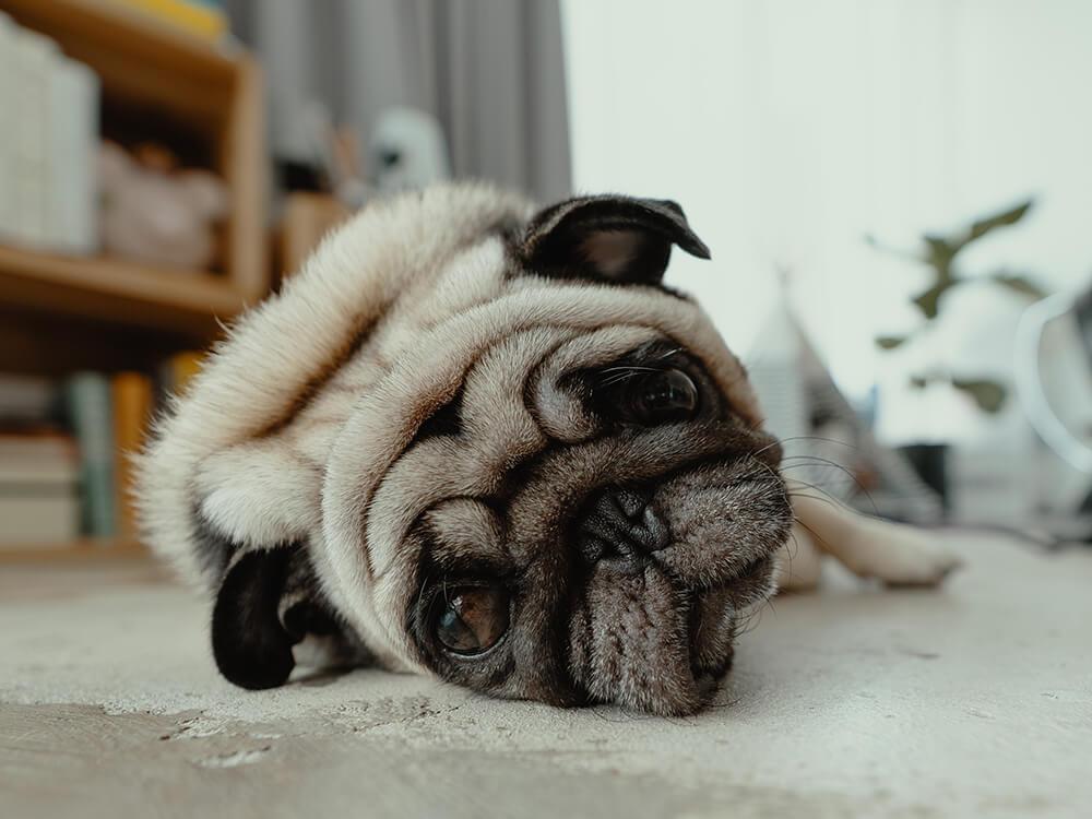 symptoms of colitis in dogs