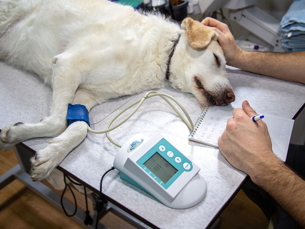 symptoms of heart murmur in dogs