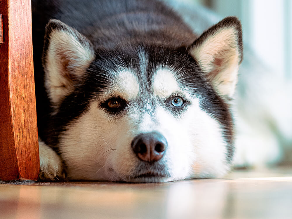 what causes stress colitis in dogs