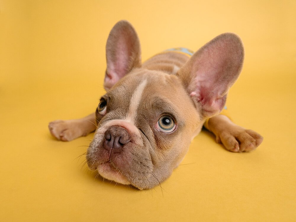 what foods cause pancreatitis in dogs