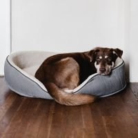Addison's Disease in Dogs: Causes, Symptoms and Treatments