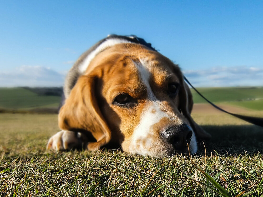 what is colitis in dogs