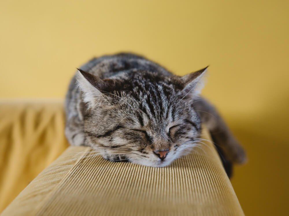 why do cats sleep so much - 3