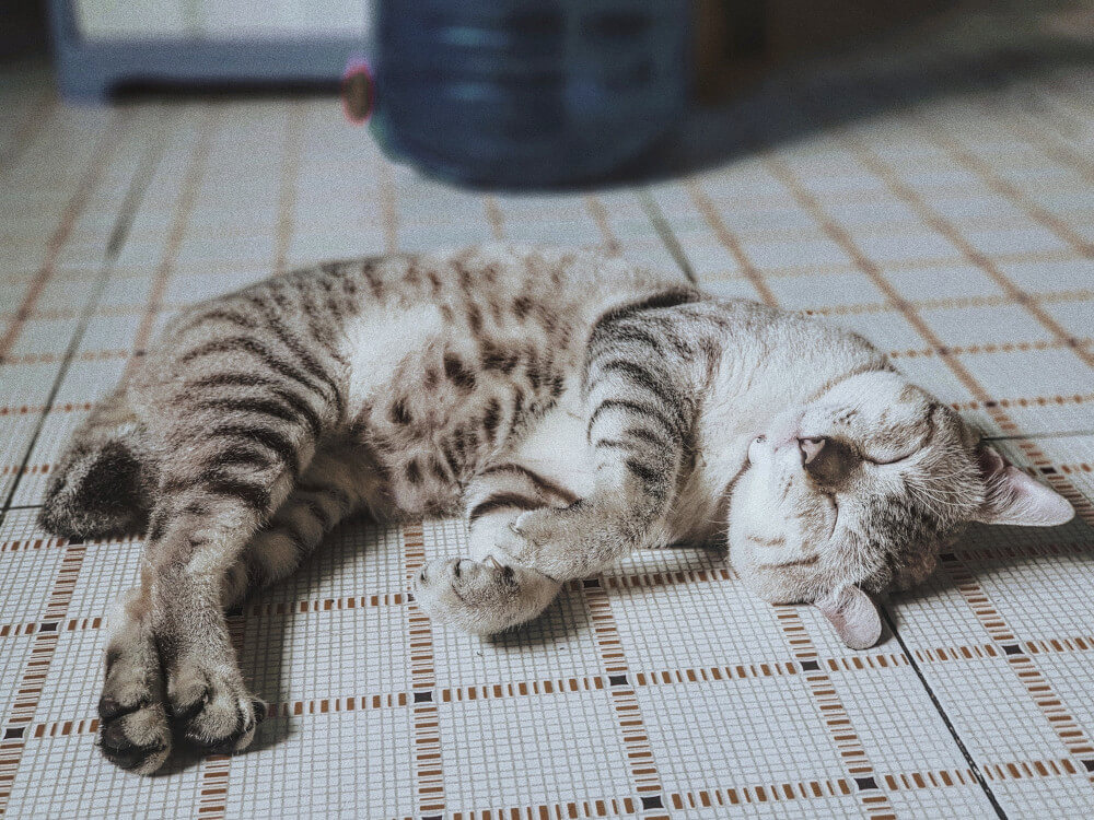 why do cats sleep so much - 5