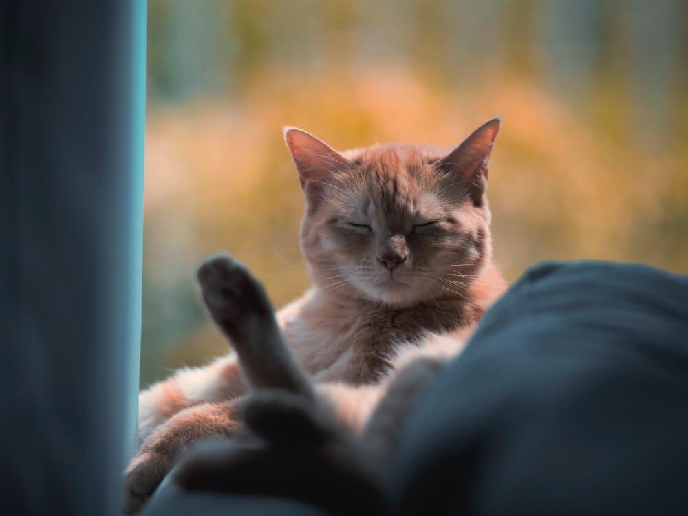 why do cats sleep so much - 6